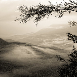 Mist in the Valley, The Greater Blue Mountains World Heritage Area